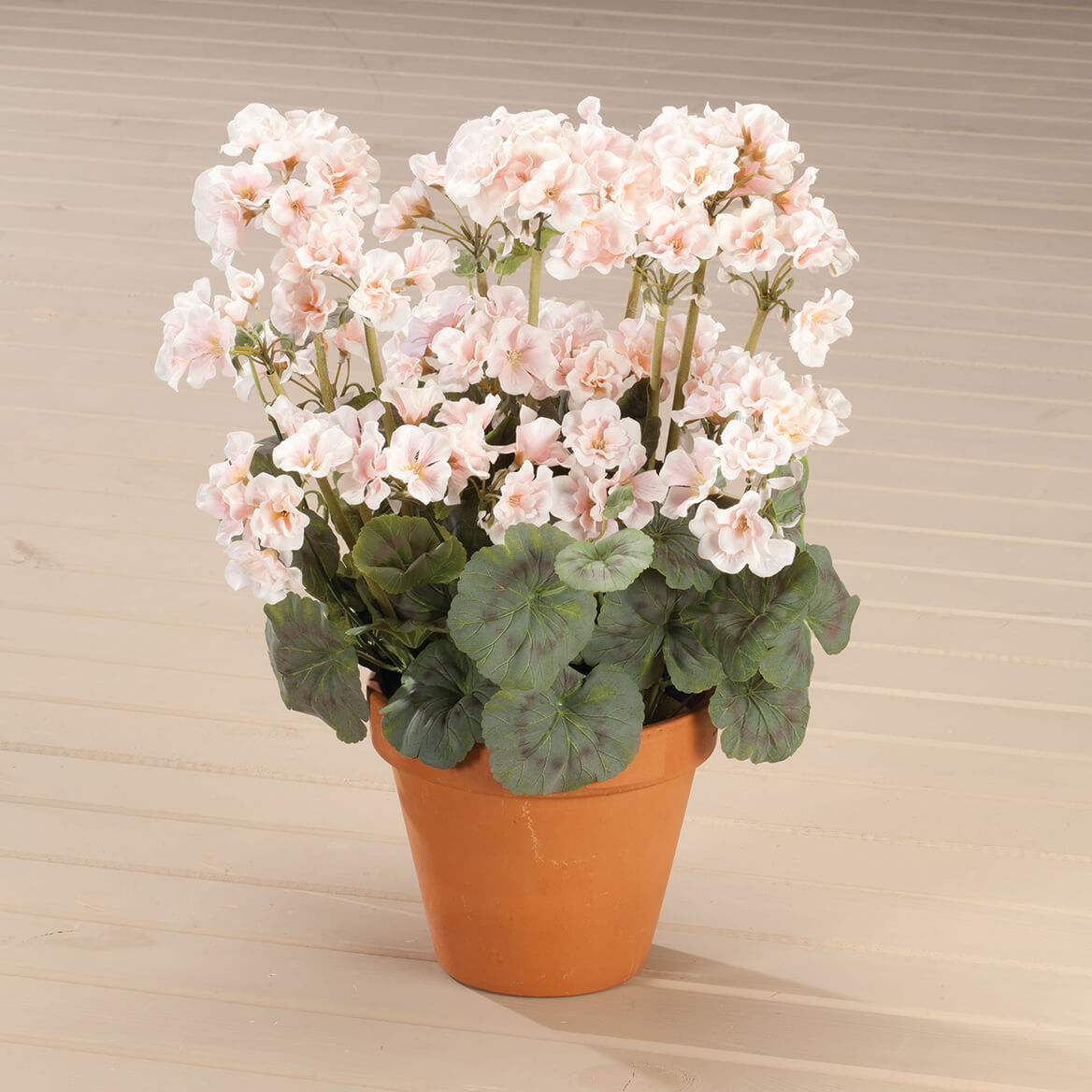 Geranium Bush by OakRidge™-338896