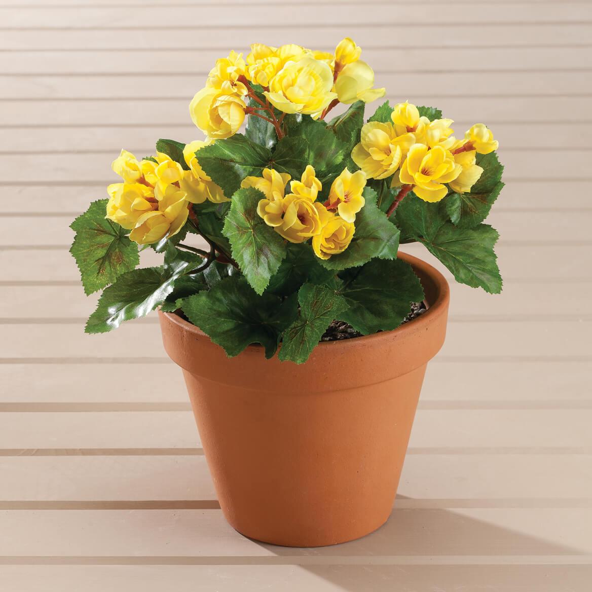 Begonia Bush by OakRidge™-348018