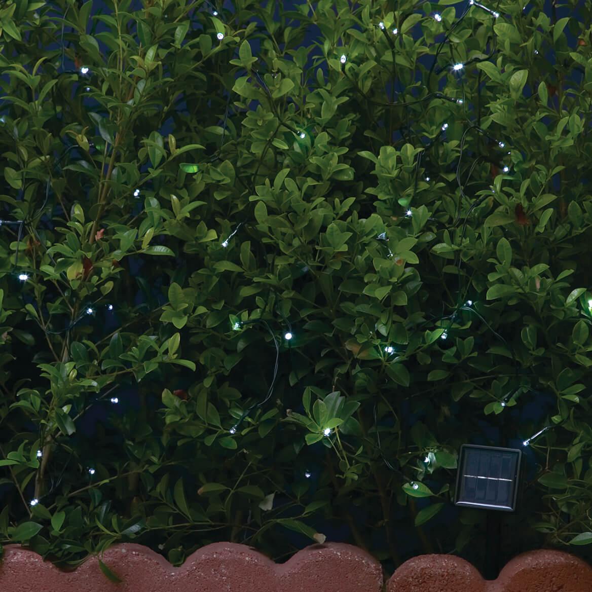 Solar String Lights-359380