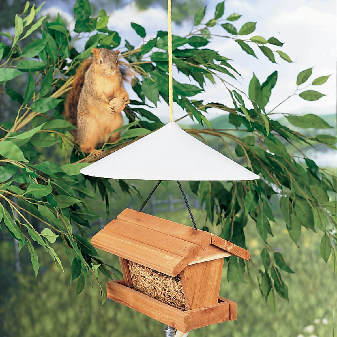 Squirrel Baffle-359406