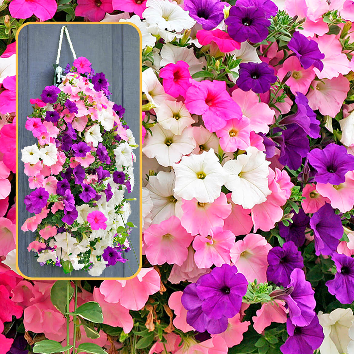 Bag O'Blooms® Sun Loving Petunias-362063