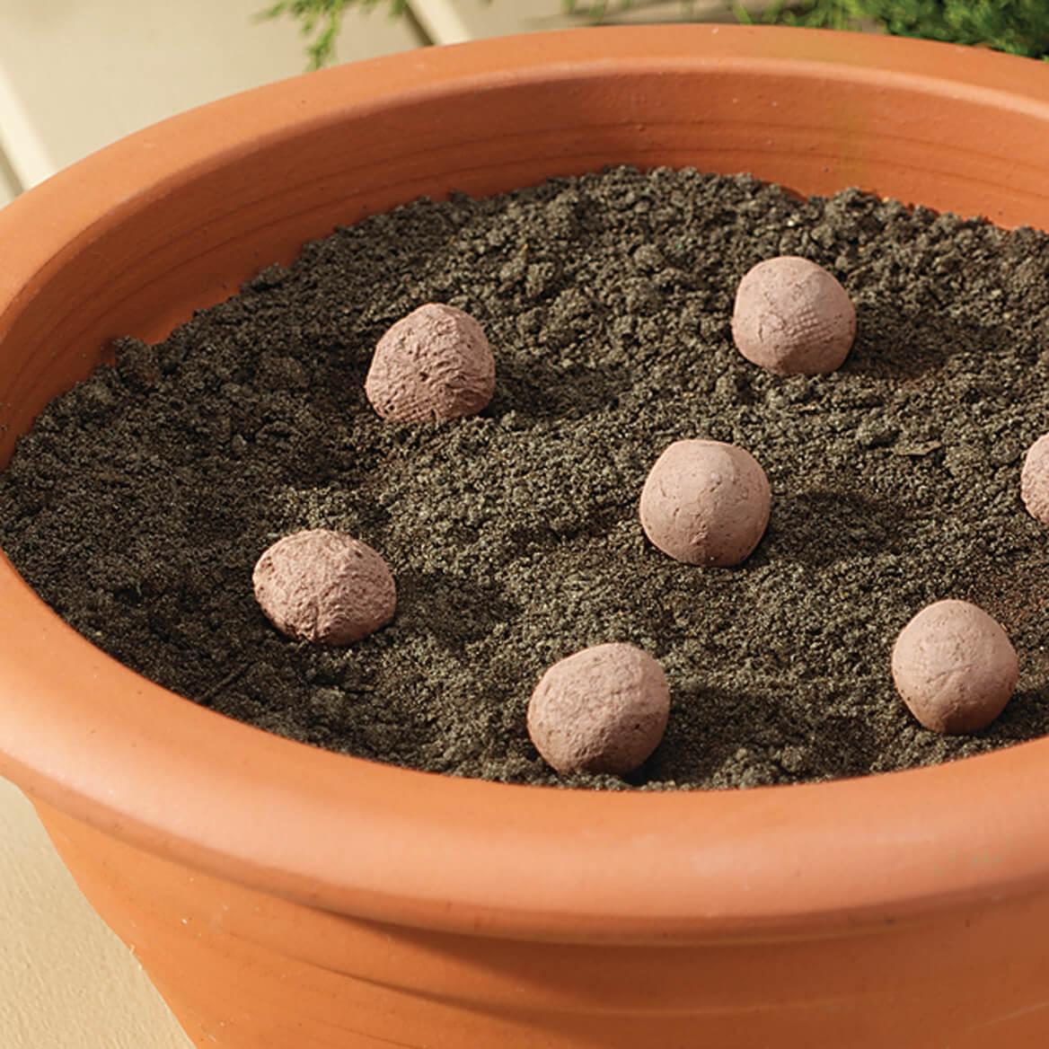 Seed Stones Cut Flowers Mixture-370553