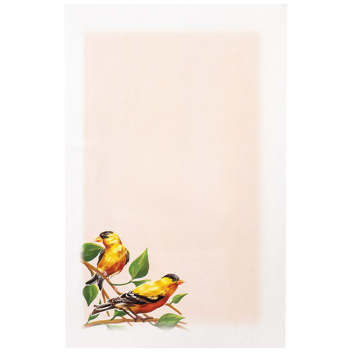 Backyard Birds Stationery Set-370613