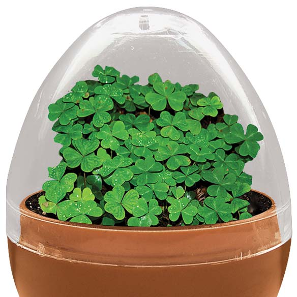 Mini Terrarium Shamrocks - View 2