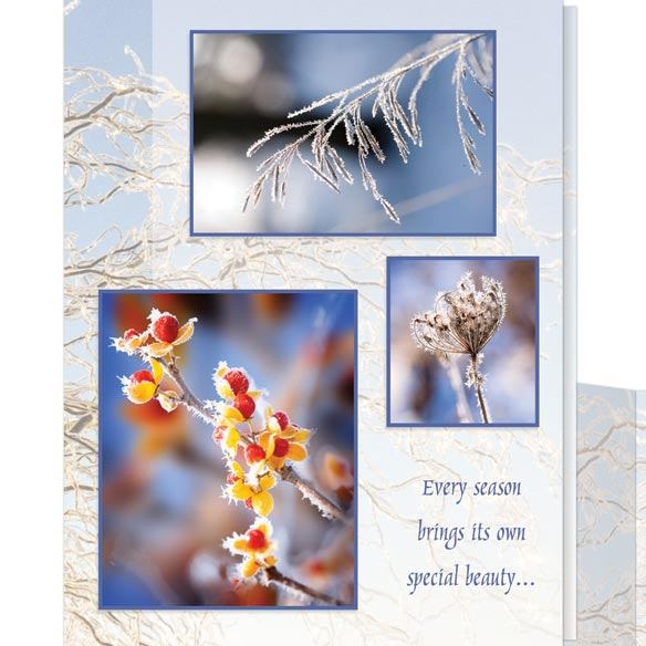 Season's Beauty Christmas Card Set of 20