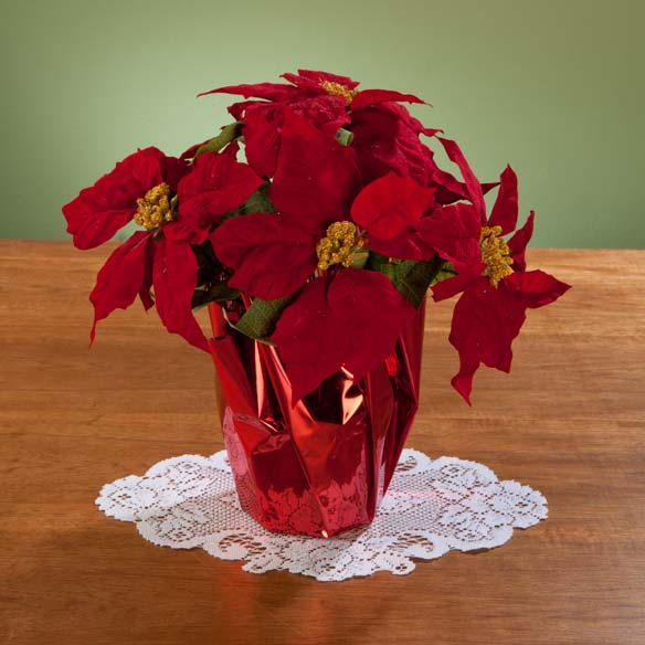 "Christmas Poinsettia 12"" - View 2"