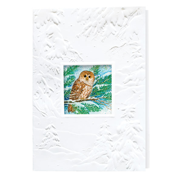 Barred Owl Merry Christmas Card Set of 20