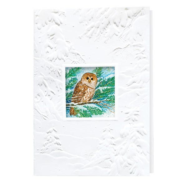 Barred Owl Happy Holidays Card Set of 20 - View 2