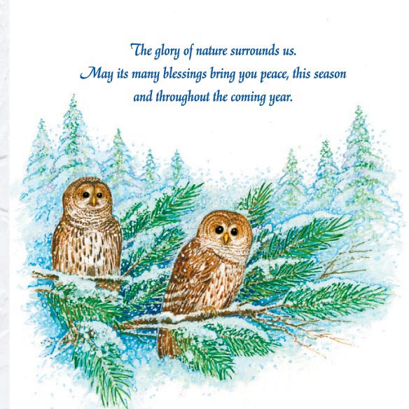 Barred Owl Happy Holidays Card Set of 20