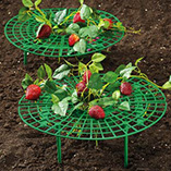 Strawberry/Vegetable Supports