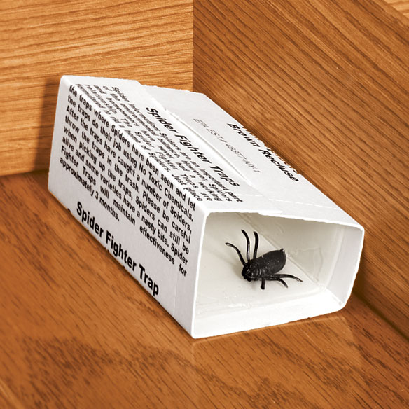 Spider Traps - Set Of 6