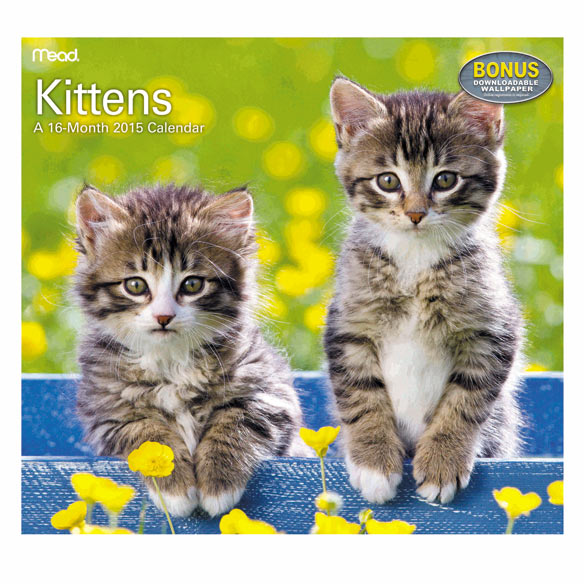 Kitten Wall Calendar - View 1