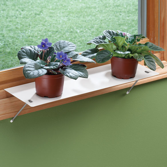 Indoor Window Shelf Plant