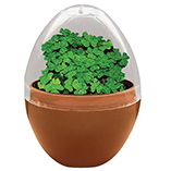 St. Patrick's Day - Mini Terrarium Shamrocks
