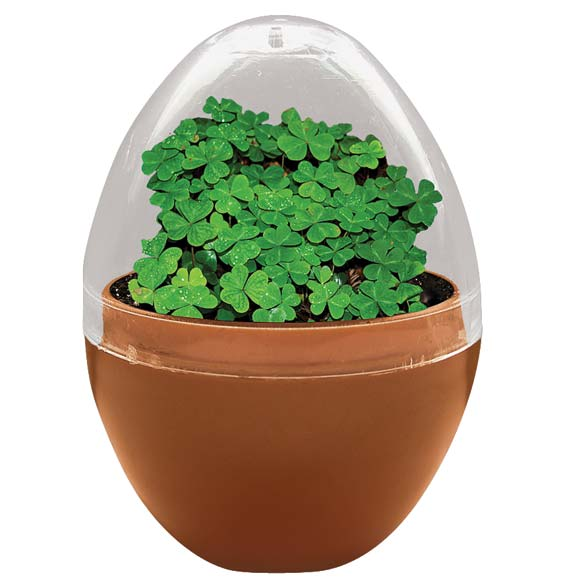 Mini Terrarium Shamrocks