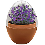 Plants, Seeds & Garden Rolls - Mini Terrarium Fairies Flowers