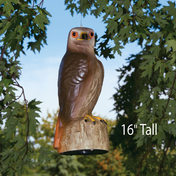 Red Tail Hawk Decoy