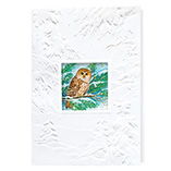 Nature Inspired - Barred Owl Merry Christmas Card Set of 20