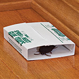 Birdfeeders & Pest Control - Catchmaster Spider & Insect Glue Boards Set of 4