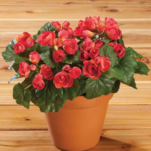 Silk Begonia Bush - View 1