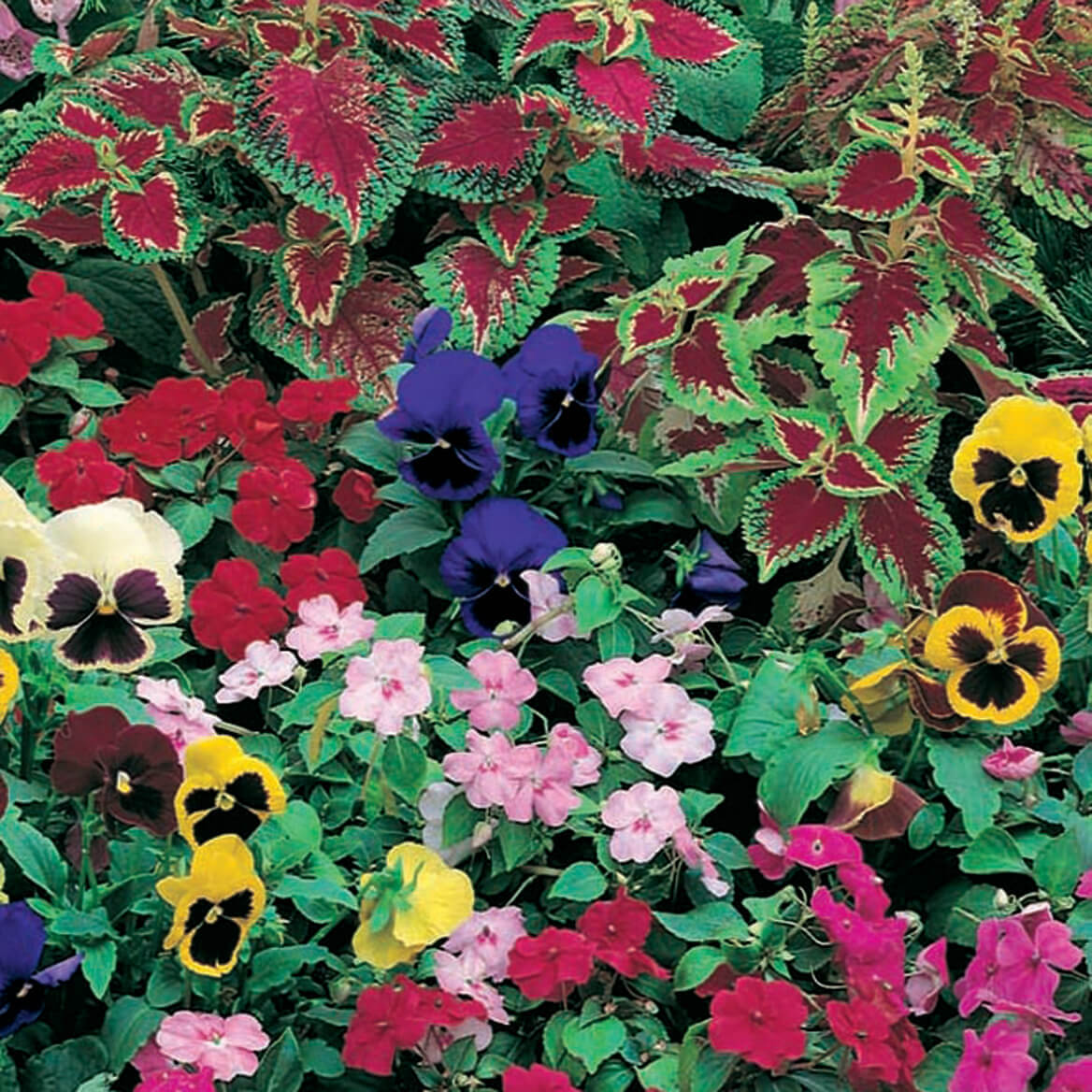 Shady Garden Roll Out Seed Mat-348135