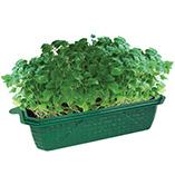 Plants, Seeds & Garden Rolls - Happy Cat Plant Kit