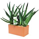 Plants, Seeds & Garden Rolls - Indispensable Aloe Kit