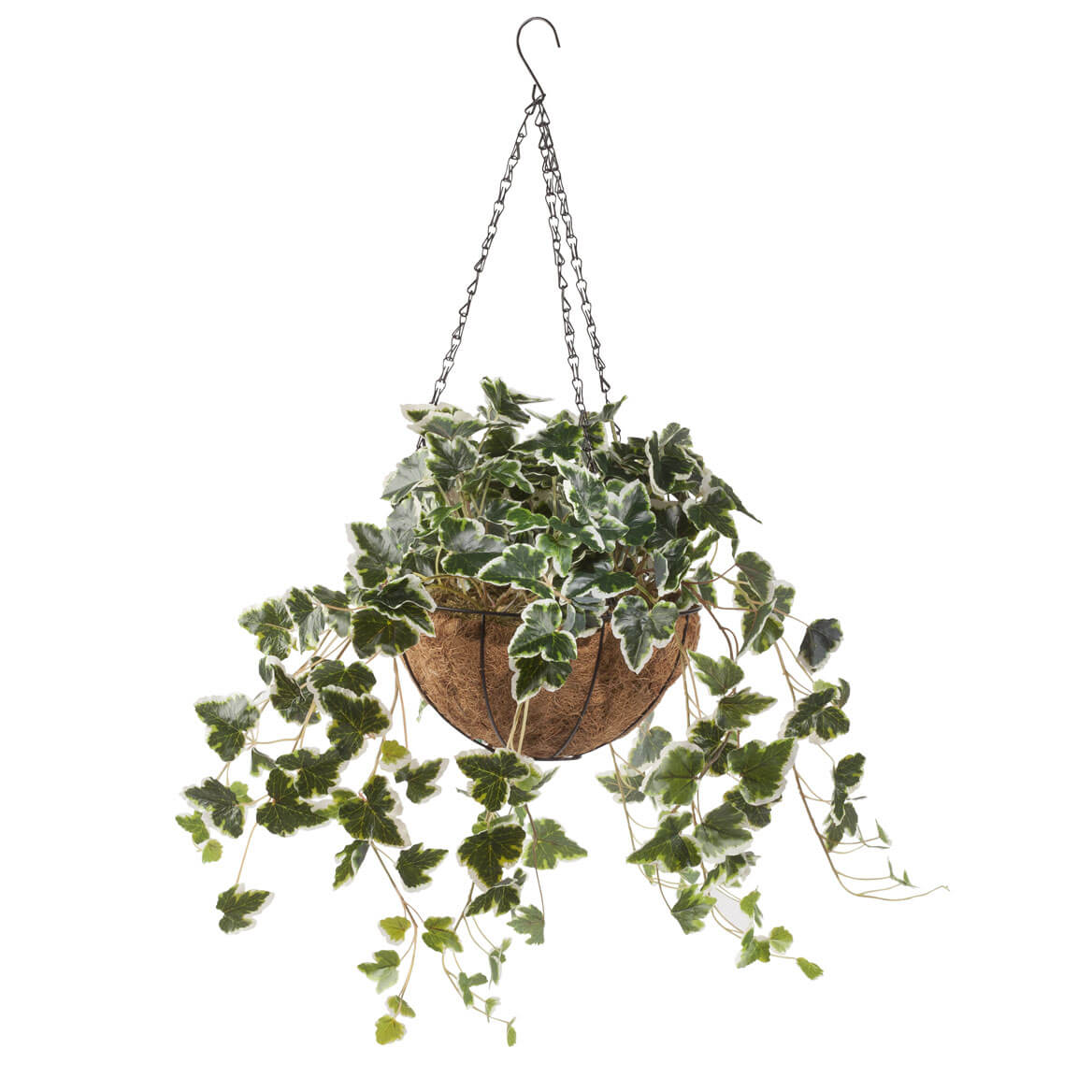 Fully Assembled Ivy Hanging Basket by OakRidge™ Outdoor
