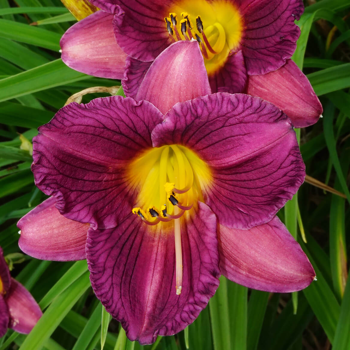 HP Banner1_flowers.jpg